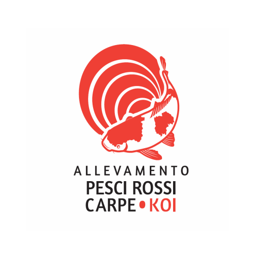 Portfolio for Allevamento carpe koi